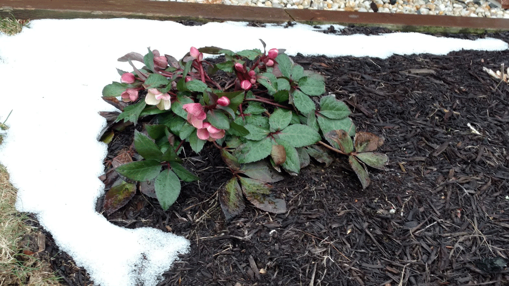 Care for The Winter Garden: Wind