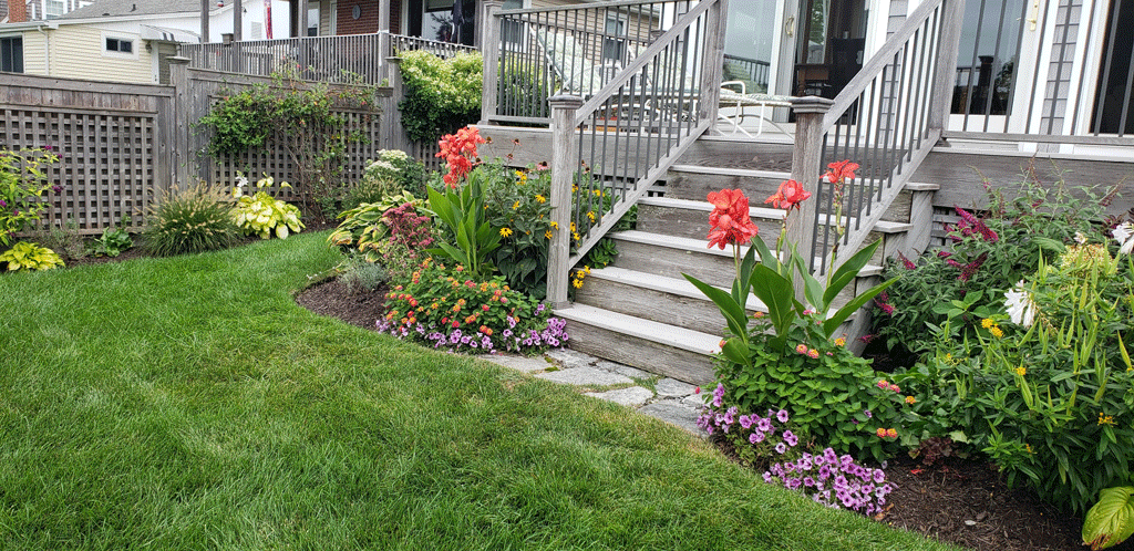 Selecting Plants for Your Garden
